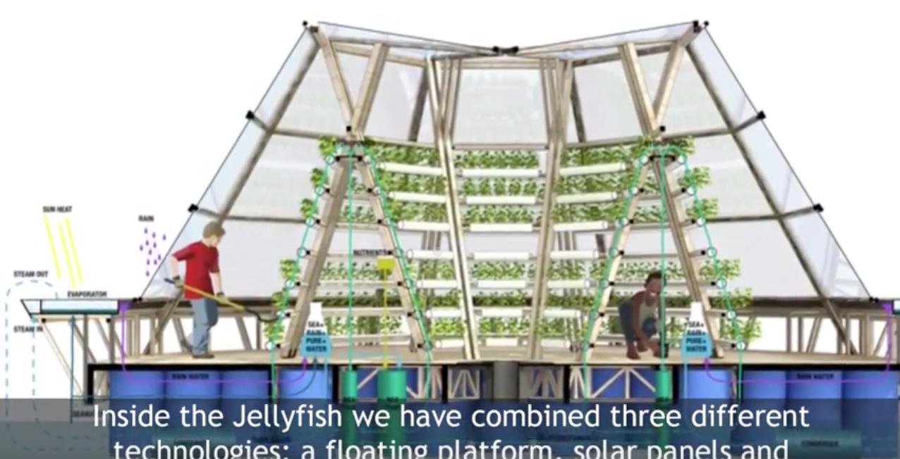jellyfish disegno