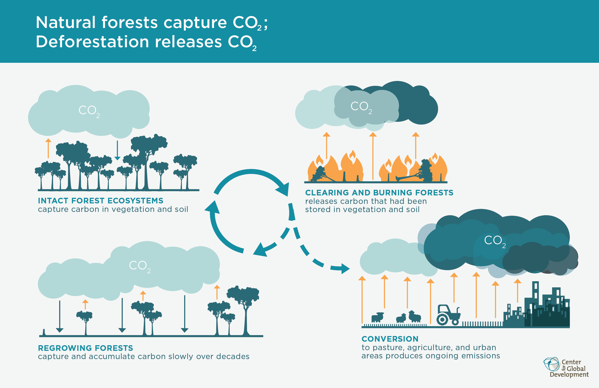 natural-forests-capture