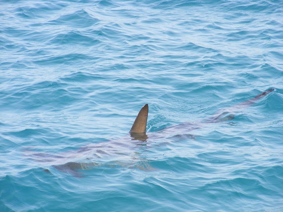 squalo 1